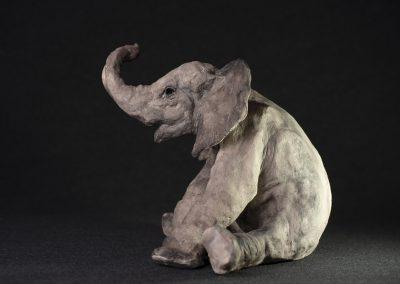éléphanteau assis - profil gauche