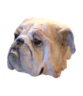Tête de bulldog anglais